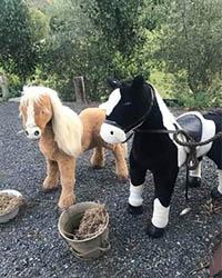 Twin Ponies $45